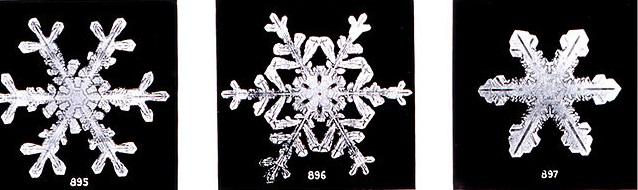640px-SnowflakesWilsonBentley